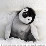 『皇帝ペンギン ただいま』公開記念イベントを、須磨海浜水族園、天王寺動物園、海遊館で開催