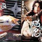『猫忍』グッズプレゼント(5/20〆切)