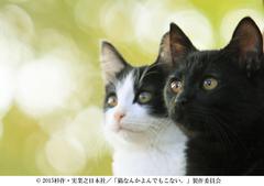 nekoyon-550.jpg