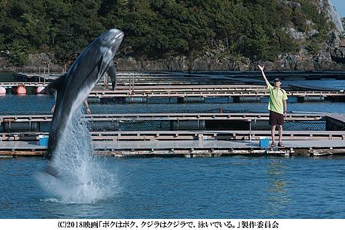bokujira-500-2.jpg