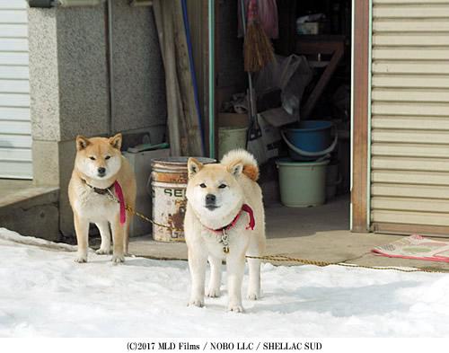 oyogisugita-500-4.jpg