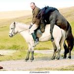 『馬々と人間たち』
