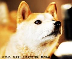 himawari-5.jpg